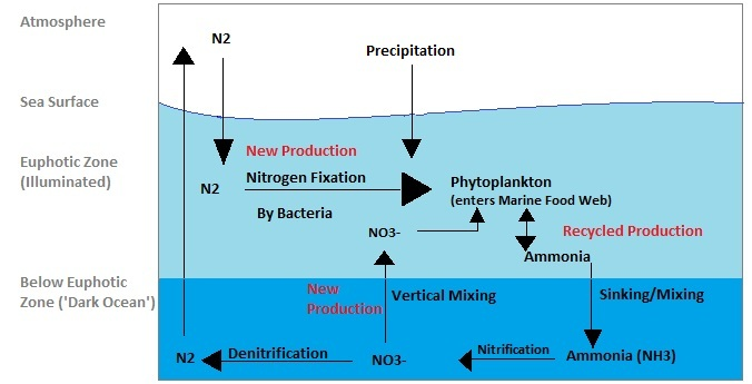 which of the following is an example of nitrogen fixation