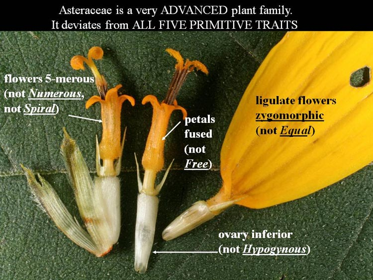 example of a plant family