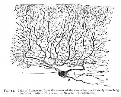example of dendrite in psychology