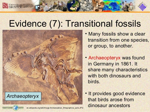 define transitional fossils and provide one example