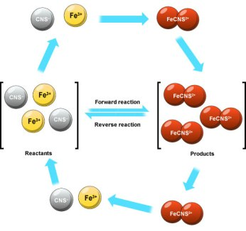 example of equilibrium in biology