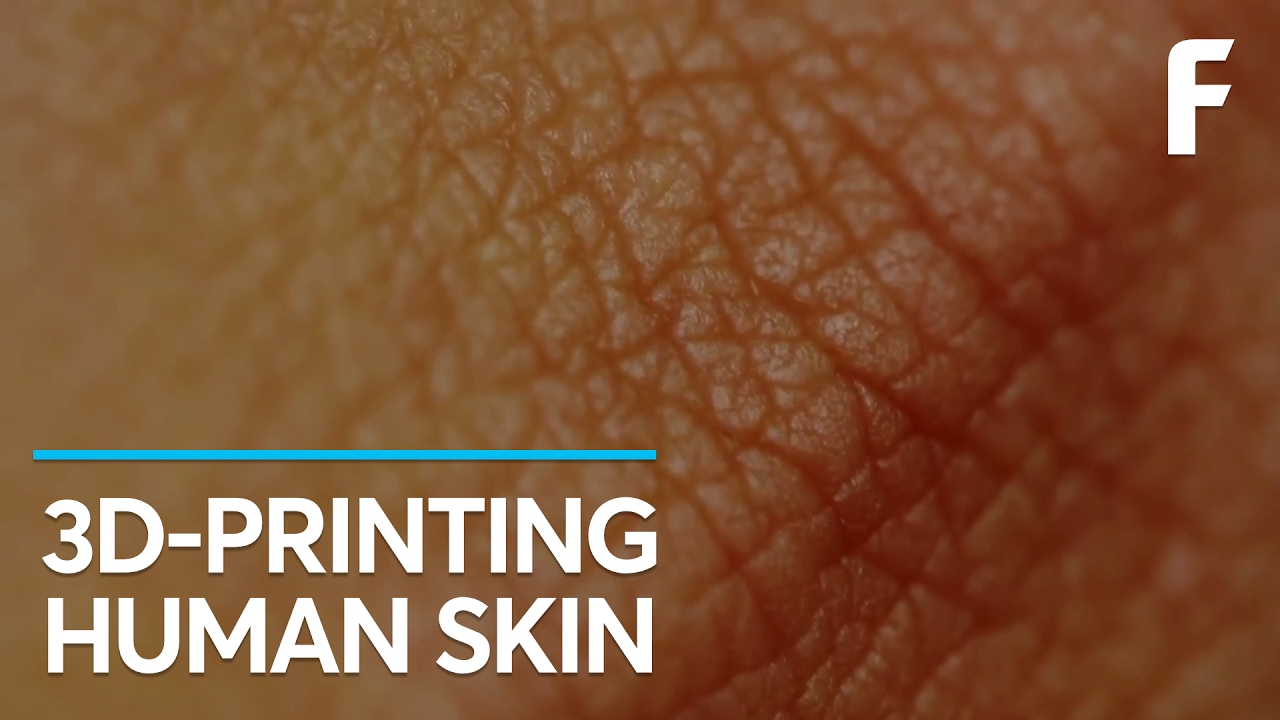 human skin is an example of a