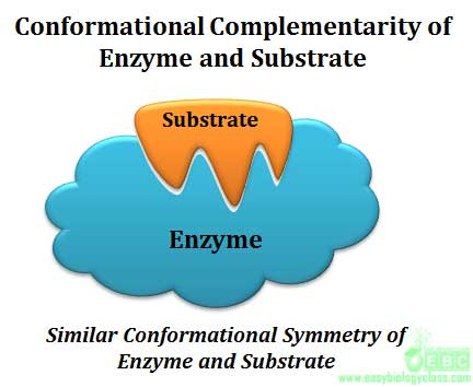 what is an example of a substrate
